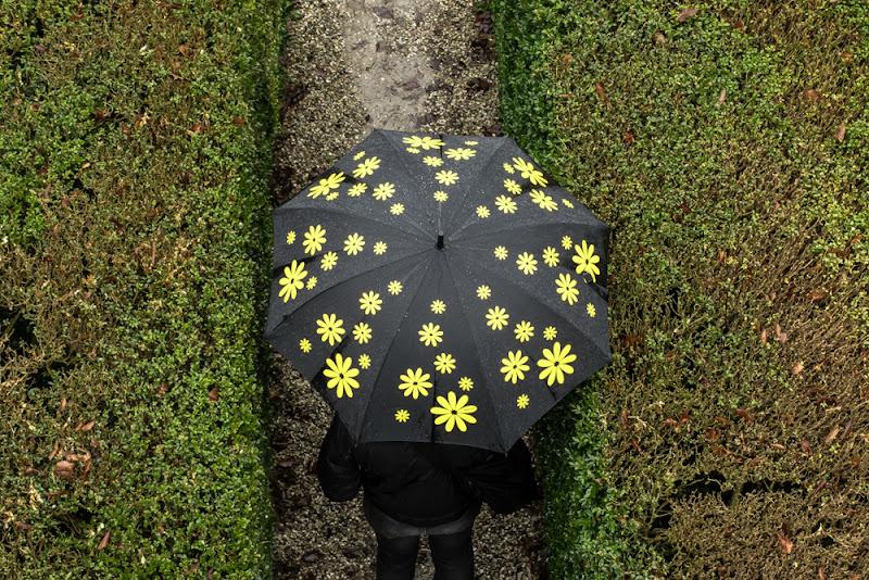 Margherite sotto la pioggia di marina_mangini