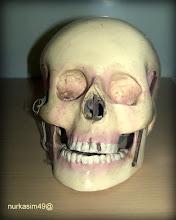 Photo: Tengkorak Homo Sapiensis. Koleksi Museum Mulawarman, Tenggarong, Kalimantan Timur. http://nurkasim49.blogspot.it