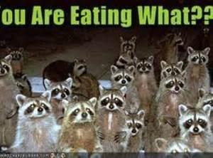 Raccoons Afraid