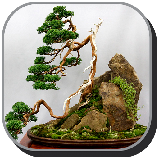 Bonsai Design Ideas