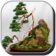 Bonsai Design Ideas icon