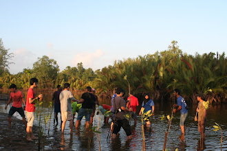 Photo: Students helping out with the mangrove replanting project at Setiu Wetlands