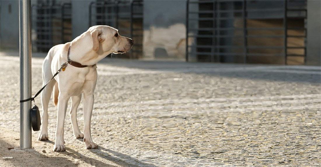 Consejos para mantener a tu perrete a salvo de los ladrones