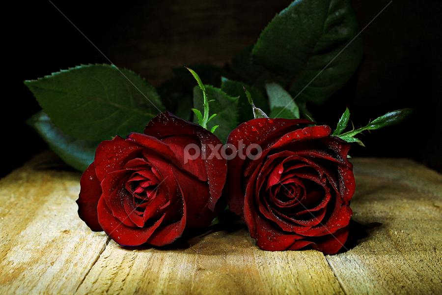 Red Roses by Suehana SuZie - Nature Up Close Flowers - 2011-2013 ( rose, stock, red, nature, wallpaper, flower,  )