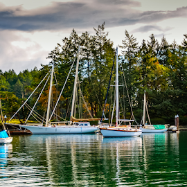by Keith Sutherland - Transportation Boats ( harbour, canada, ocean, sail boat, green water, boats, trees )