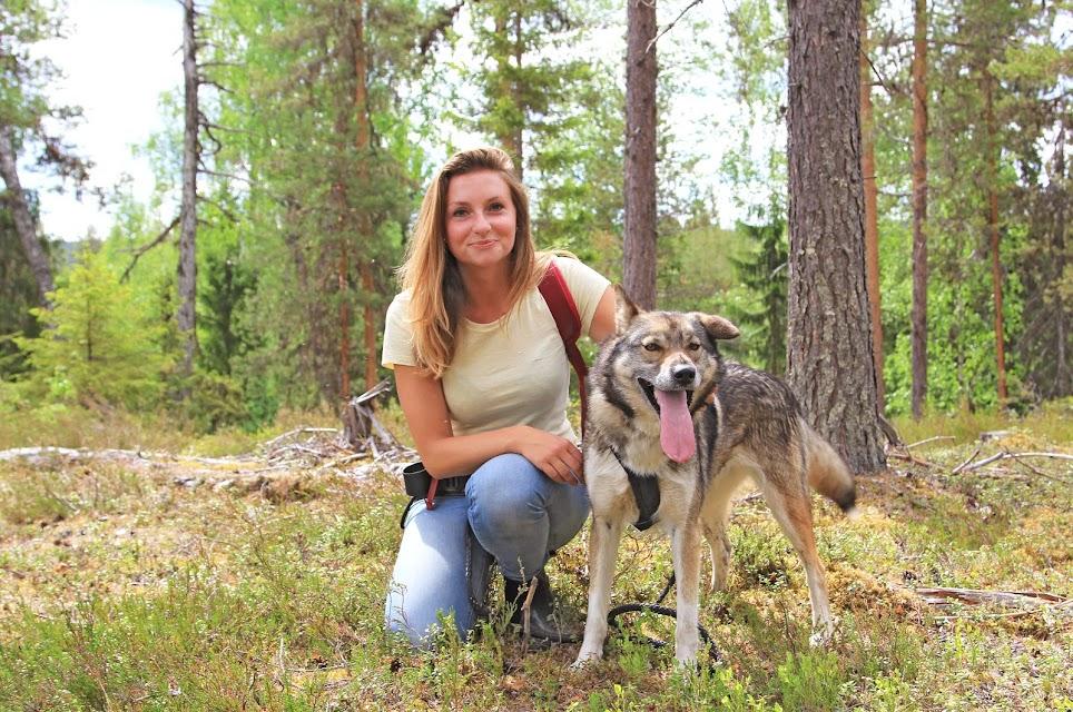 wandelen-huskies-zweden