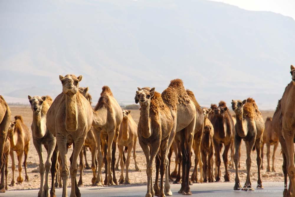 Locais perto de Salalah a visitar na região de Dhofar | Omã