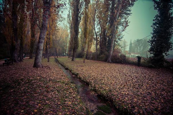 Nebbia d'autunno di Massimiliano zompi