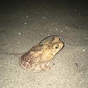 Sapo / Toad