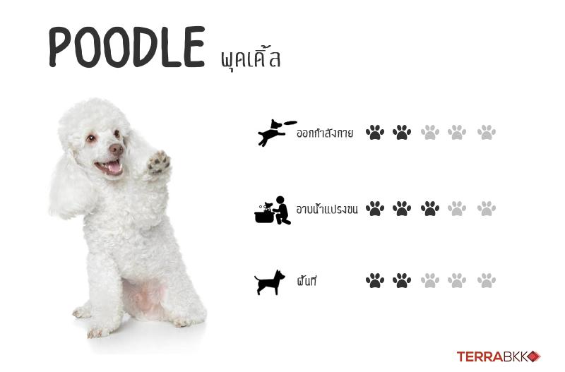 5. พุดเดิ้ล (Poodle)