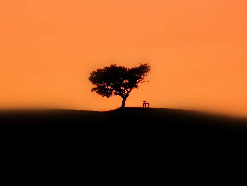 Tree and Chair on Top of the Hill di filippo.fulceri.93