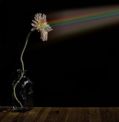 fiore di vincenzo_spera