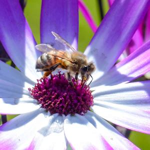 White and Purple Plus Bee.jpg