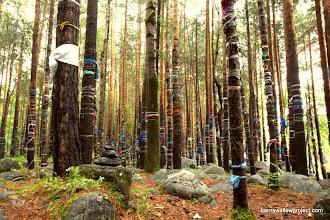 Photo: Georgy's Photo: Spirit Trees in Arshan