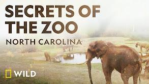 Secrets of the Zoo: North Carolina thumbnail