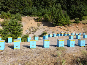 Photo: fabrique de miel bleu