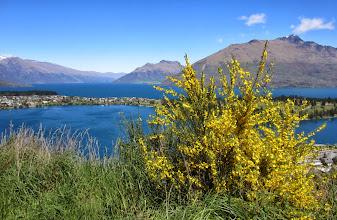 Photo: Kevään keltaisen koristama Wakatipu-järvi