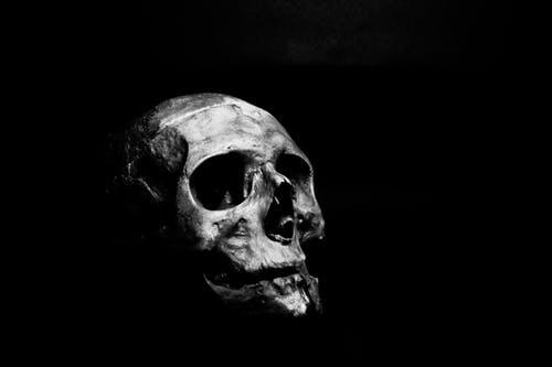 Fotos de stock gratuitas de blanco y negro, cabeza, calavera, cráneo