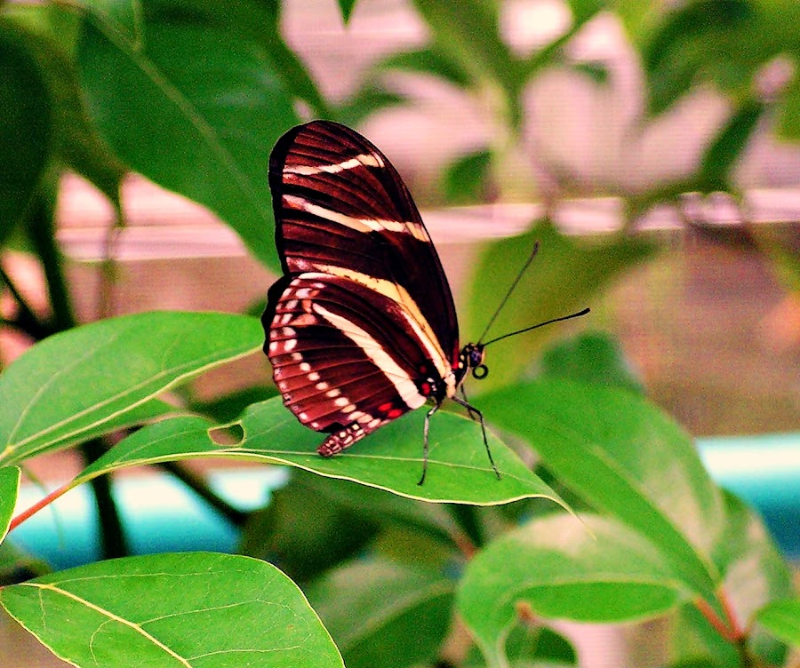Butterfly by MaryBeth Schepper - Animals Other ( nature, butterfly,  )