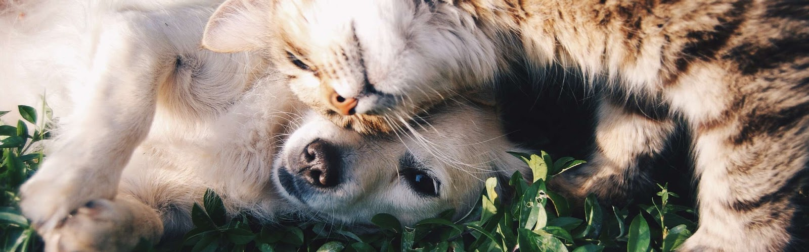 Home Visits For Dogs & Cats Lyndhurst | Paws & Prints