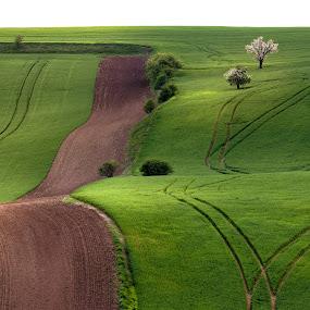 Green spring in moravian fields by Jan Stupka - Landscapes Prairies, Meadows & Fields ( april, green, waves, green fields, czech republic, czech, trees, landscape, spring, fields )
