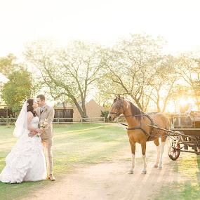 Everafter by Valerie Meyer - Wedding Bride & Groom ( carriage, horse, bride and groom, oakfield farm, muldersdrift )