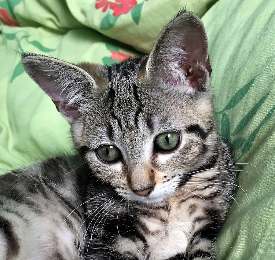 Oddy by Dobrin Anca - Animals - Cats Kittens ( love, green, cat, garden, brittany )