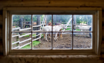 """Photo: Horse in Window - Yellowstone  There is a small slice of solace, I think, in considering the names of some of the great paintings from my impressionist heroes. They have names like """"Girl in Field"""" and """"Sun on Water"""". Not too exciting, but they do stand the test of time. But """"Horse in Window""""? I think not!  from Trey Ratcliff's travel photography blog at www.stuckincustoms.com"""