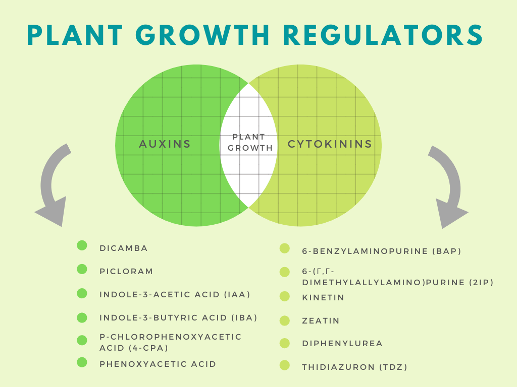 List of plant growth regulators in either the auxin class or cytokinin class. These regulators are important factors in plant regeneration and plant function