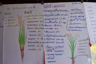 Photo: SRI demonstration posters prepared by SMART Farmers , TOT4 , Tha Tum , Surin