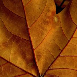 *** by Adriana Petcu - Nature Up Close Leaves & Grasses ( macro, close up, nature, autumn, leaf )