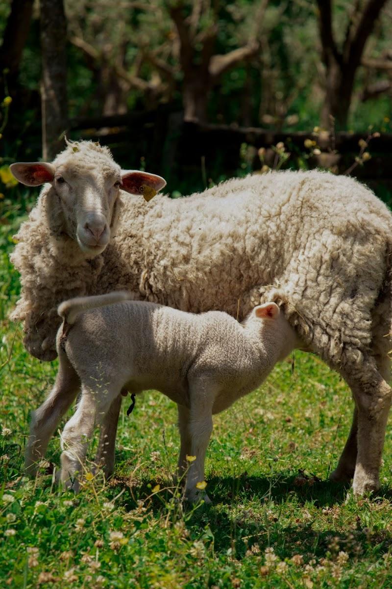 Pastorizia e vita agricola  di DanielaL