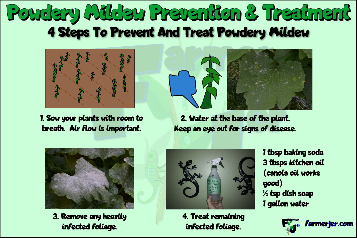 4 Steps To Prevent And Treat Powdery Mildew