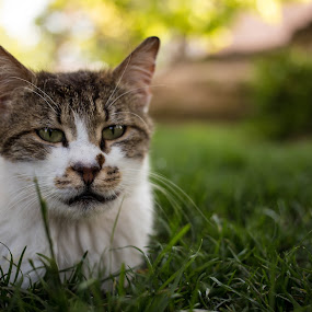Cat enjoying the day by Manuel Herrmann - Animals - Cats Portraits ( cat, grass, green, istanbul, animal )
