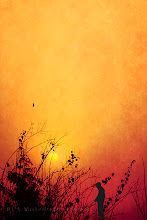 Photo: #textureblendphotography   #atmosphere  Red Dawn Have a great Day! http://wuestenhagen-imagery.photoshelter.com/gallery-image/new-nuevo-neu/G00005KL_sDRMu40/I00008s5sOp5urSY