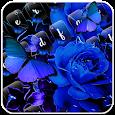 Blue Rose Keyboard