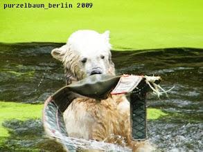 Photo: Knut mit Knautschnase :-)