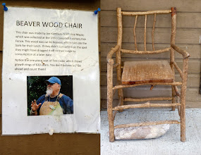 Photo: As the caption on the left says, Joe Kambeitz, our DFO Community Advisor for many years, thought it would be a good conversation piece if we made a chair from some of the Beaver sticks that collect on the fish fence. To make the seat Joe cut a piece from a blackened old cedar log he found lying in the Fraser River near his office at the eastern tip of Annacis Island. Joe counted 630 years of growth rings along the front edge and he challenges you to check.