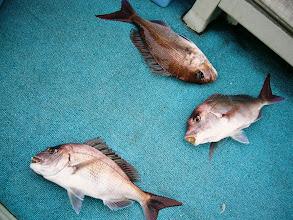 Photo: な、なんと! トリプルキャッチ! ・・・魚は、一匹ずつ釣りましょう!