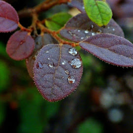 by Alvin Ngow - Nature Up Close Natural Waterdrops