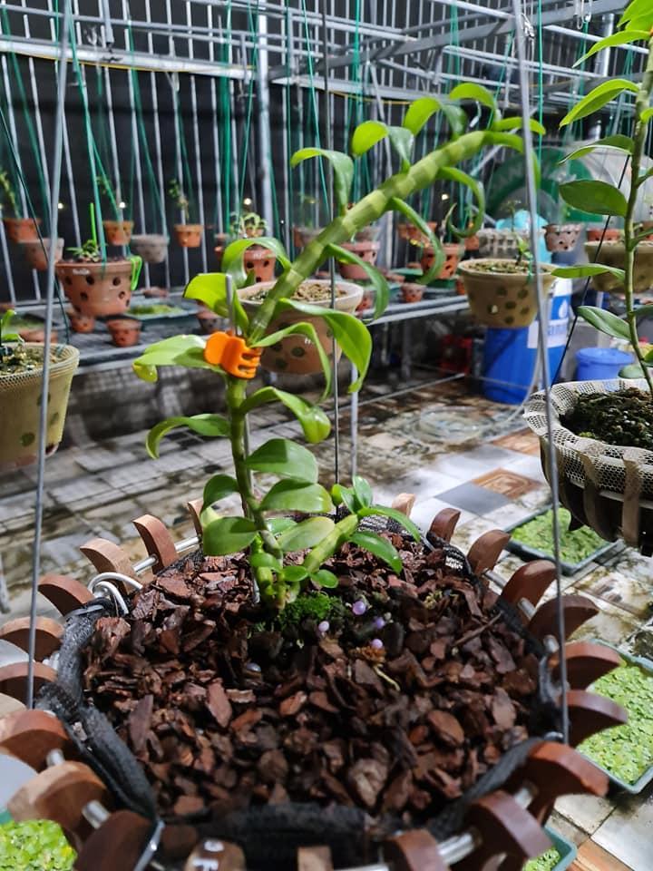 Chặng đường khởi nghiệp gian nan của ông chủ vườn lan nổi tiếng Bắc Ninh - Trương Cường - Ảnh 3
