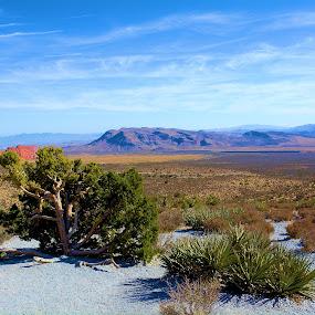 North Rim Red Rock Canyon by Linda Brooks - Landscapes Deserts ( desert plants, mountains, rock formations, desert, landscape )