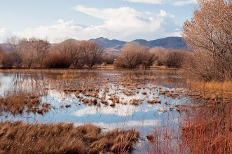 Photo: Flooded field at Bosque del Apache
