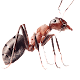 Download لعبة النمله بدون نت For PC Windows and Mac