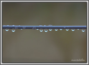 Photo: Water Drops