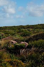 Photo: Habitat of Caladenia nivalis