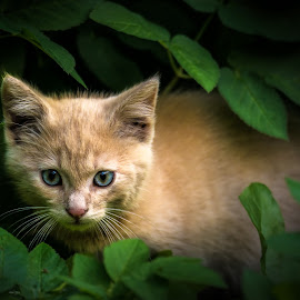 hidden in leaves by BO LED - Animals - Cats Kittens ( leaves, nature, closeup, cat, animal )