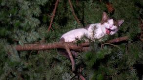 Cat Men to the Rescue thumbnail