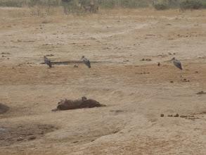 Photo: Sad, a dead baby elephant :( :( :(