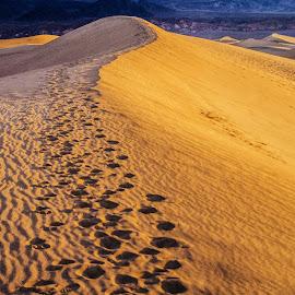 Dune at Sunrise by Richard Michael Lingo - Landscapes Deserts ( sand dune, sand, death valley, desert, landscape,  )